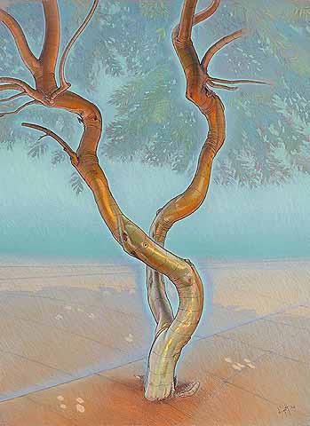 Silvery tree