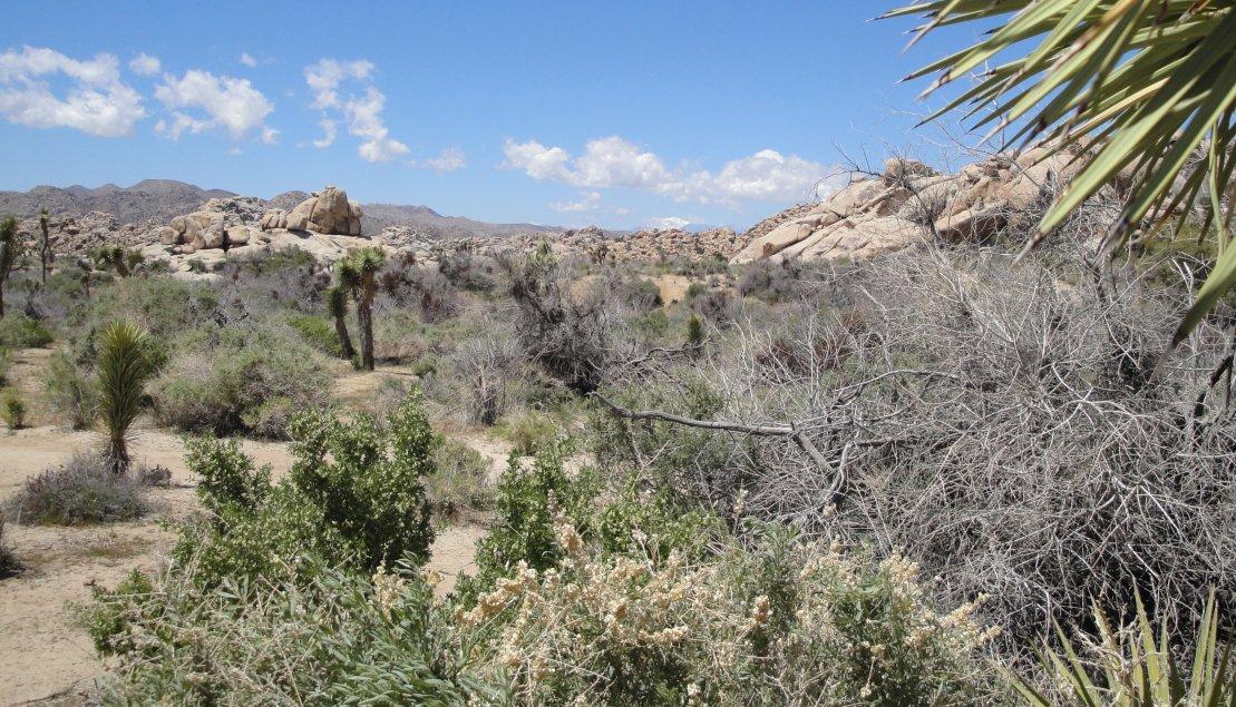 Typical Kessaen landscape