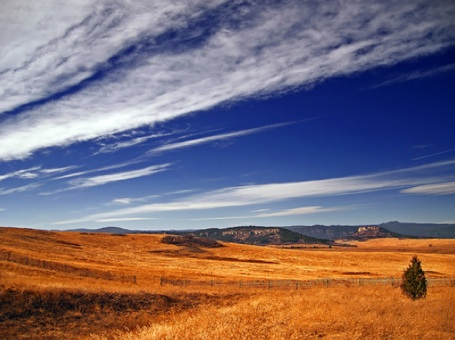 Cynthian plains 1