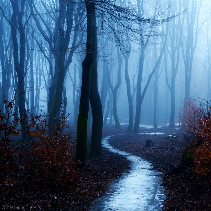 Foggy wet path in forest