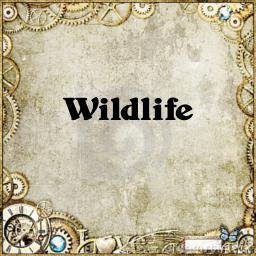 Ico wildlife