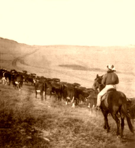Cattletrail 500