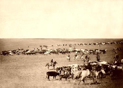 Cattletrail2