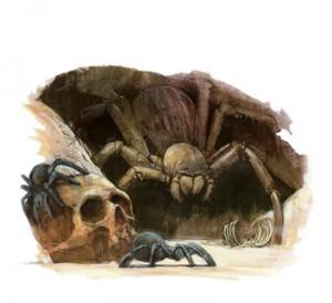 Spider 300x274