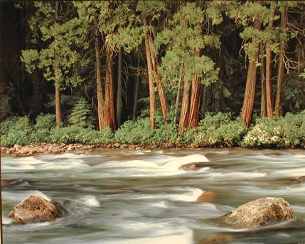 Im forest river
