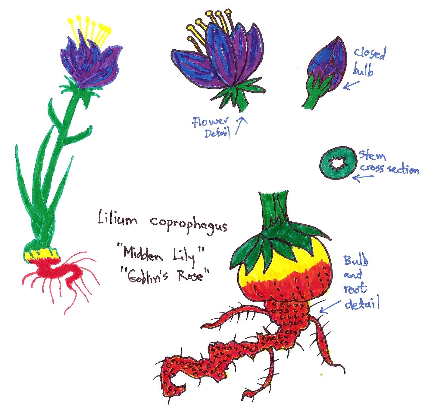 Lilium coprophagus