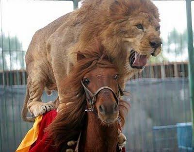Amazing  animal stunts 9