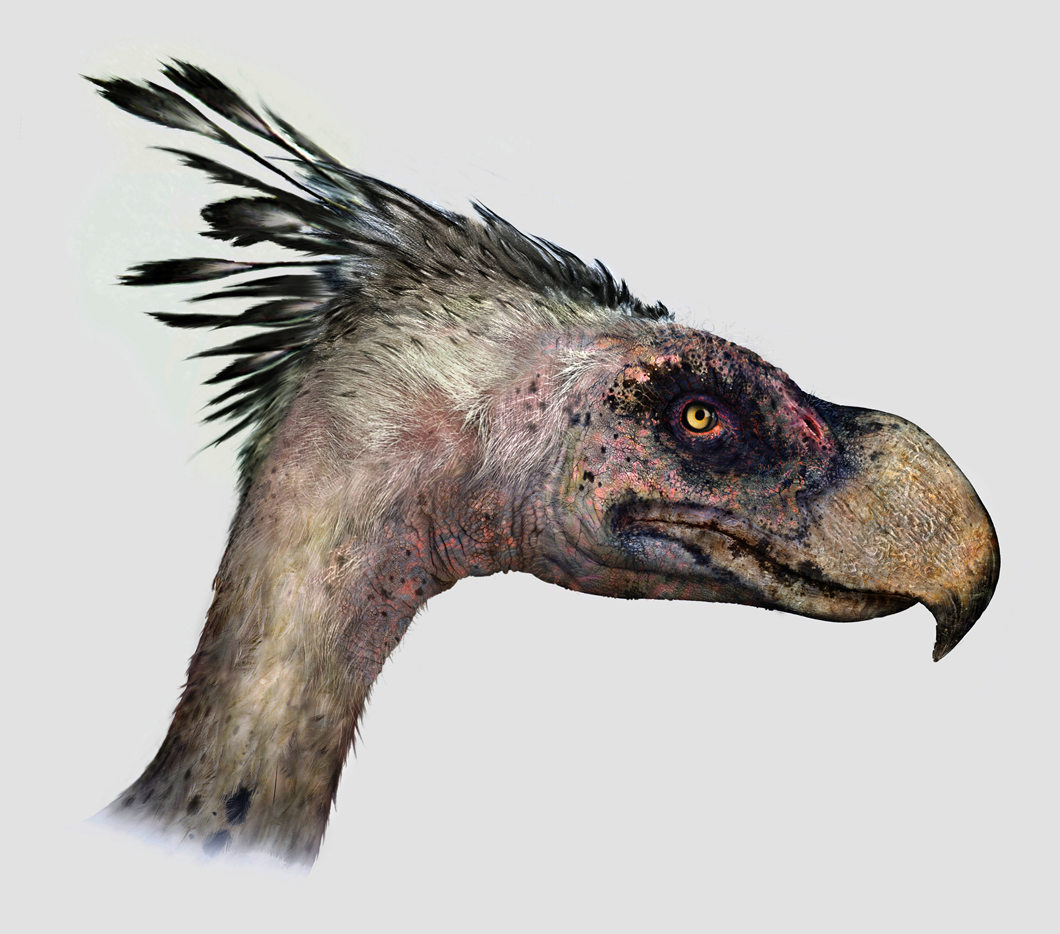 Terror bird portrait