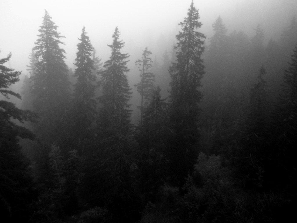 Murmuring woods