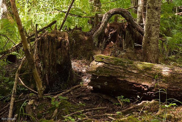 Rozkład w lesie