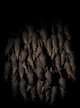 Ratswarmtop dr kpl01