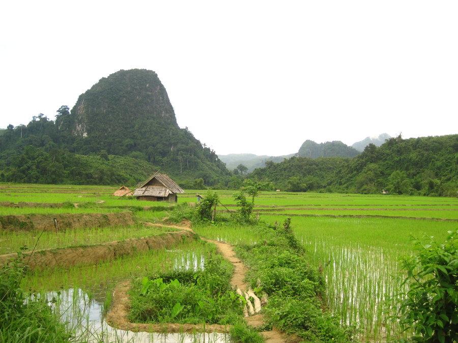 Rice paddies by tukonda d2zy27w