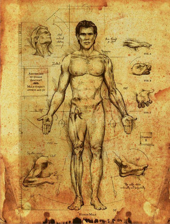 Human anantomy