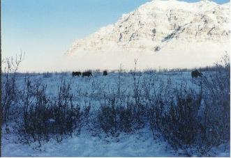 Anaktuvuk scenery