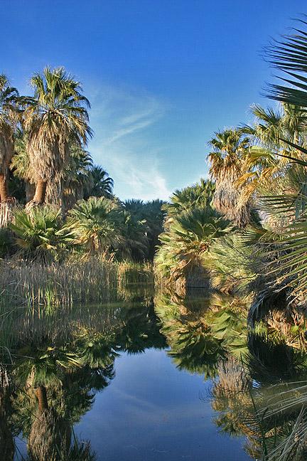 Desert oasis water pool v1