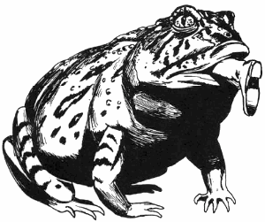 Giant toad   holloway