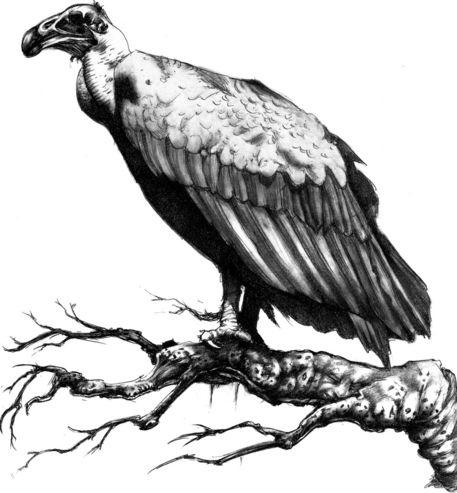 Dead vulture adj bg