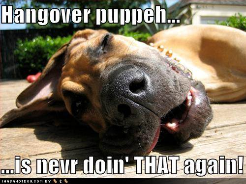 Funny dog pictures hangover puppy