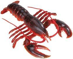 Lobster lg