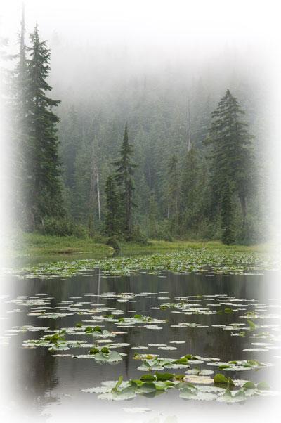 Winterbole forest