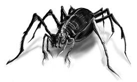 Spider samll