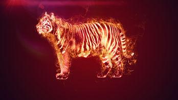 Normal burning tiger