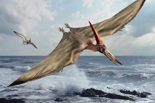 Pteranodon sd