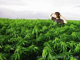 Pot field humboldt