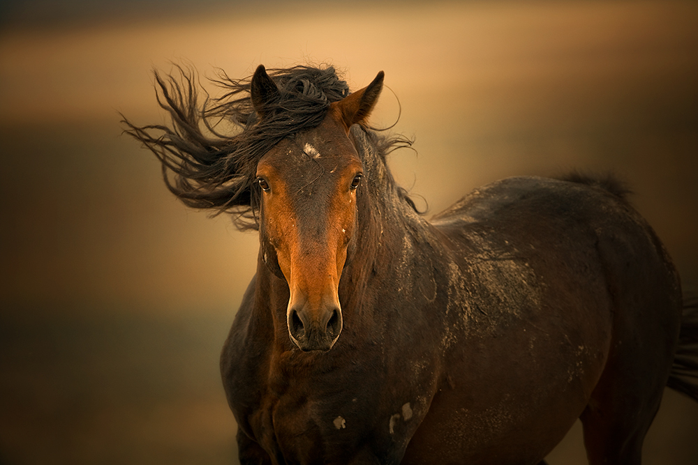 69 1wild horses vibrance 04