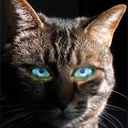 Cyber cat