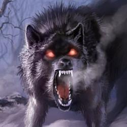 Wolf 03 dire