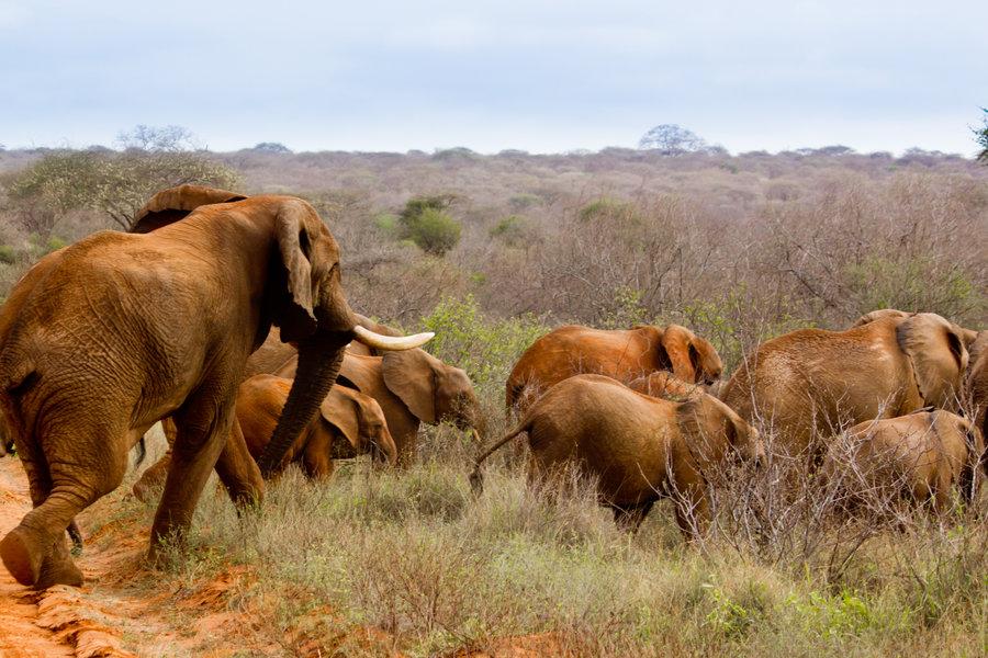 Fauna elefantes
