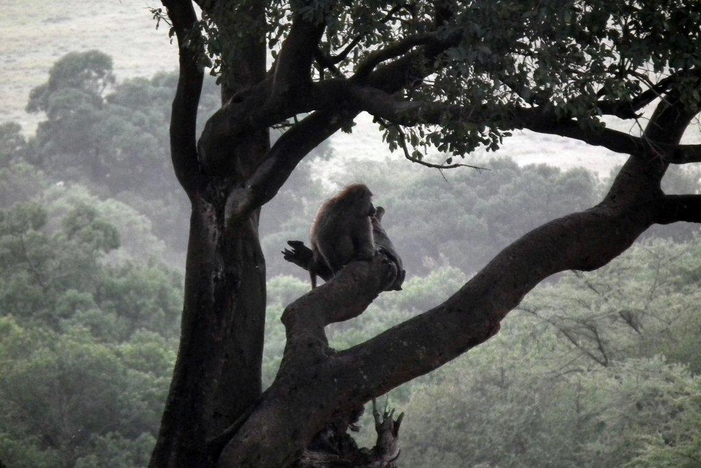 Fauna mono