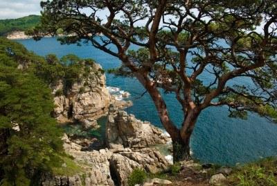 Rocks trees