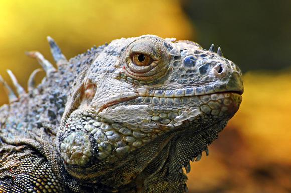 129 reptiles zoo