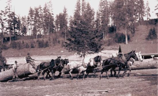 Bleth logging