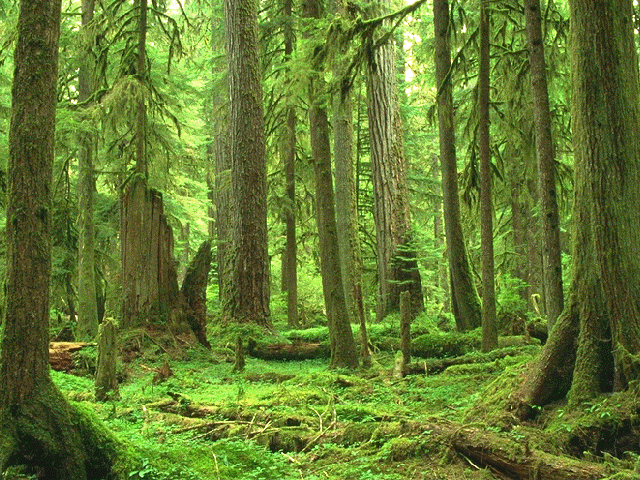 Elven forest 1
