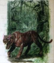 Phyrr cat