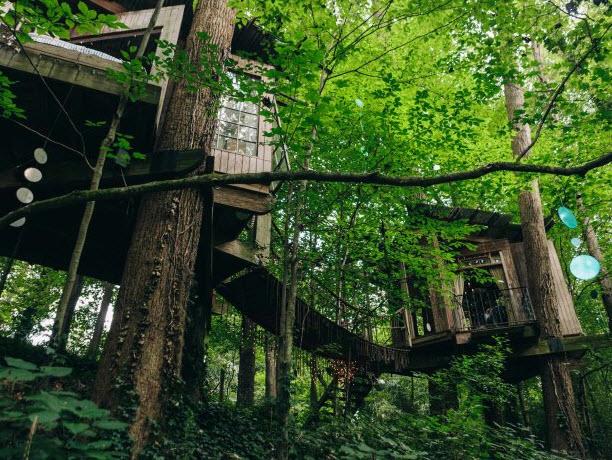 City tree house