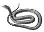 800px black snake 1  psf