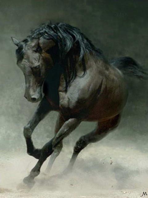 Black mare arubarna