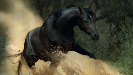 Arubarna black mare