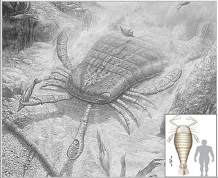 Sea scorpion