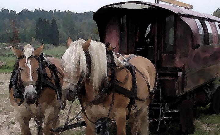 2 wagon horses