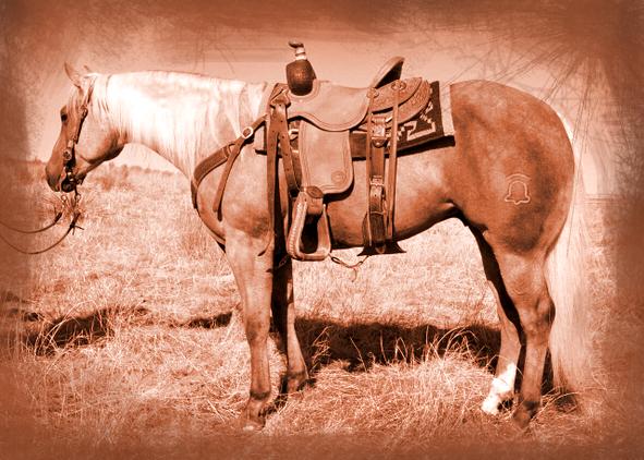 Horse palomino llamrei