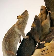 130602 rats