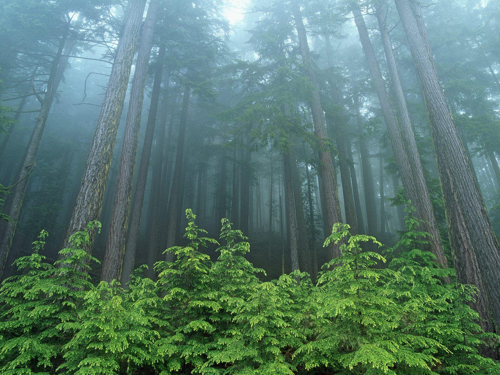 The mist shrouded woods