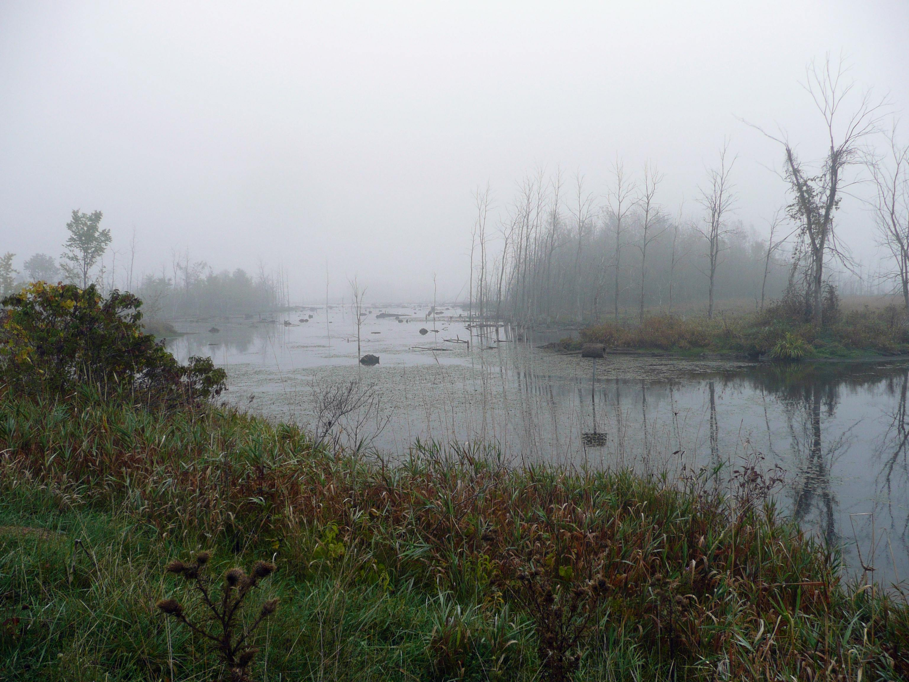 A fog shrouded view of the Squalid Marsh