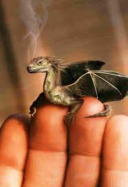 Tiny dragon on fingers