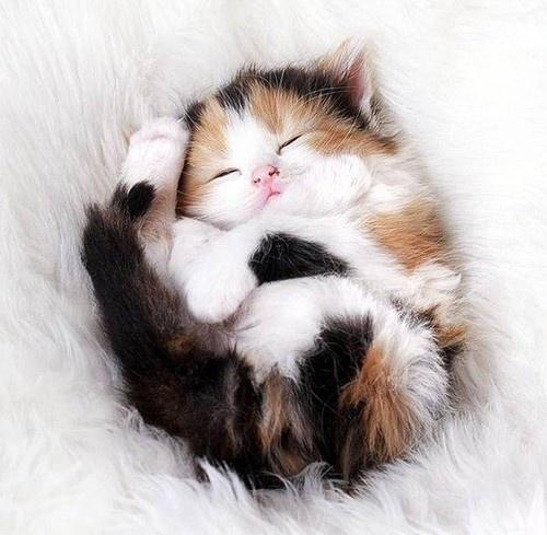 Fluffy love.